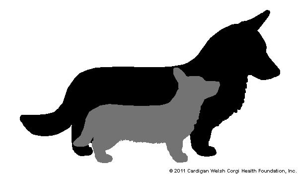 Cardigan Welsh Corgi Health Foundation