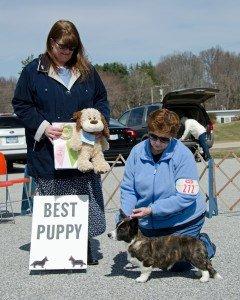 Best_puppy_1