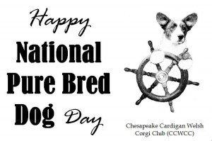 CCWCC Purebred Dog Day