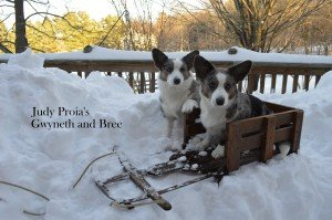 Judy's Snow Dogs